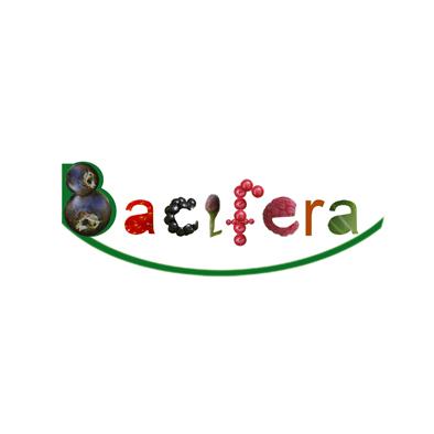 Bacifera